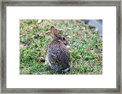 Framed Print featuring the photograph Bunny by Teresa Blanton