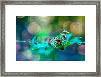 Burdock Bloom Superstar Framed Print