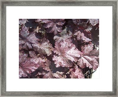 Burgandy Leaves After The Rain Framed Print by Anna Villarreal Garbis