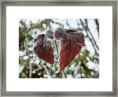 Burgundy Frost Framed Print