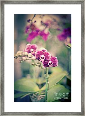 Framed Print featuring the photograph Burgundy Orchids by Ana V Ramirez
