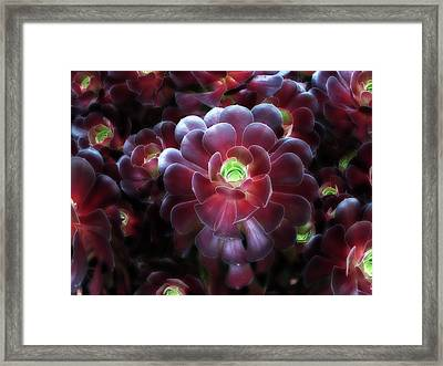 Burgundy Succulenta Framed Print