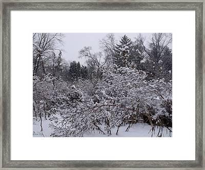 Buried Bramble Framed Print by Anna Villarreal Garbis