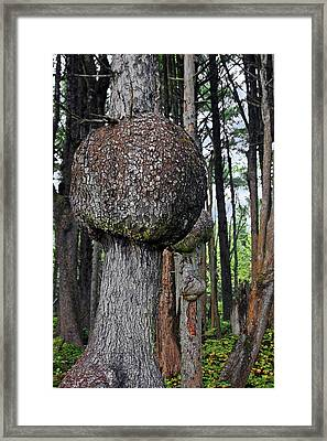 Burly Phantoms - Spruce Burls Beach One Olympic National Park Wa Framed Print