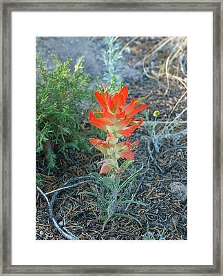 Burning Bush Framed Print