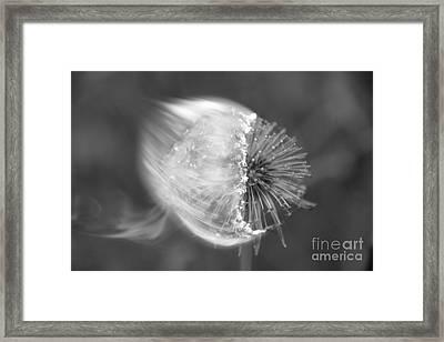 Burning Dandelion Framed Print