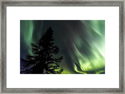 Burning Tree 3 Framed Print by Kyle Lavey