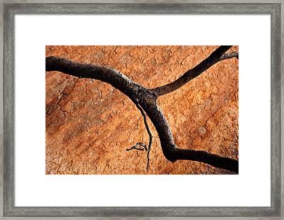 Burnt Orange Framed Print