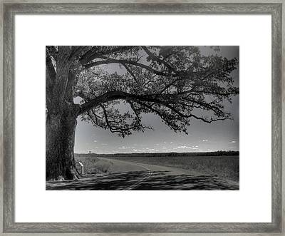 Burr Oak Tree Framed Print by Jane Linders