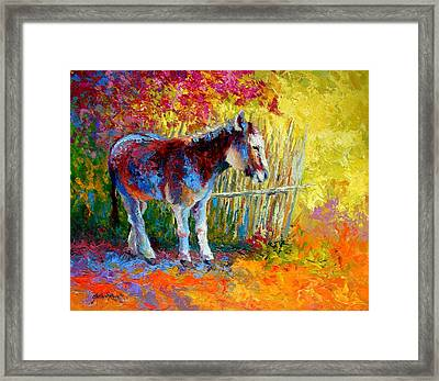 Burro And Bouganvillia Framed Print by Marion Rose