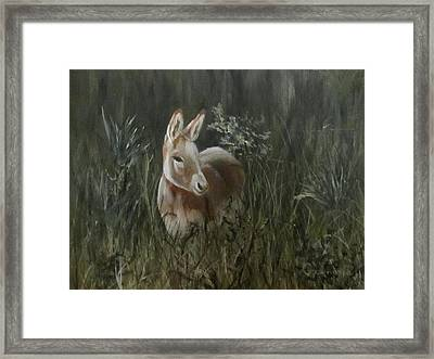 Burro In The Wild Framed Print