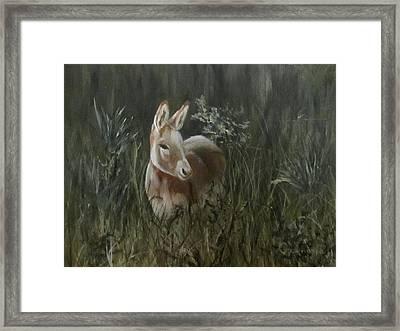 Burro In The Wild Framed Print by Roseann Gilmore