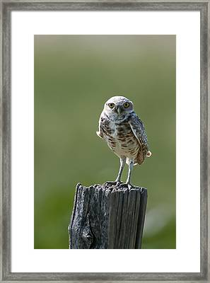 Framed Print featuring the photograph Burrowing Owl by Gary Lengyel