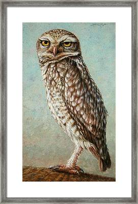 Burrowing Owl Framed Print by James W Johnson