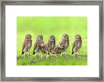 Burrowing Owl Framed Print by Thy Bun