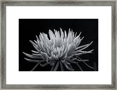 Burst 2 Framed Print by Sheryl Thomas