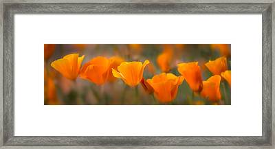 Burst Framed Print by Mikes Nature