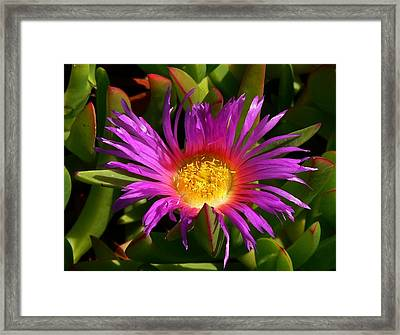 Framed Print featuring the photograph Burst Of Beauty by Debbie Karnes