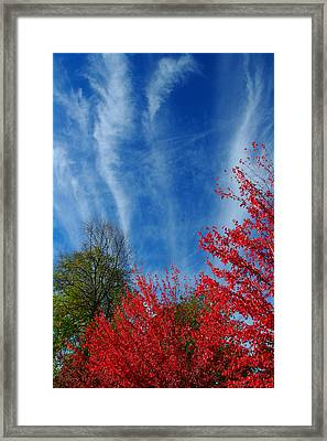 Burst Of Color Framed Print by Gerry Tetz