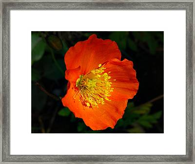 Framed Print featuring the photograph Burst Of Colors by Marilynne Bull