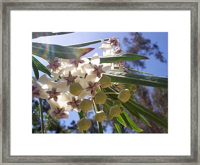 Burst Of Flowers Framed Print by Jean Booth