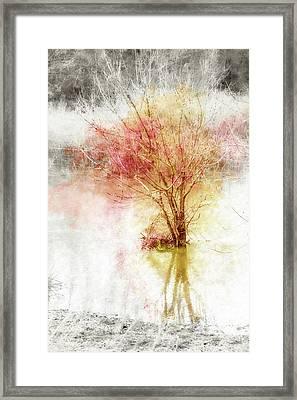 Burst Of Autumn Color In Winter Framed Print