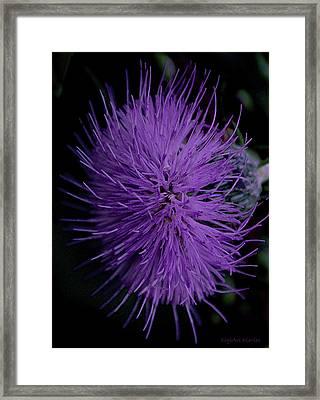 Burst Of Violet Framed Print