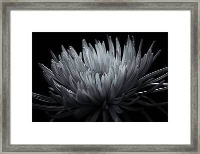 Burst Framed Print by Sheryl Thomas