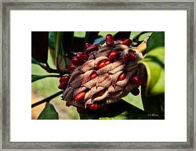 Bursting Forth Framed Print by Christopher Holmes