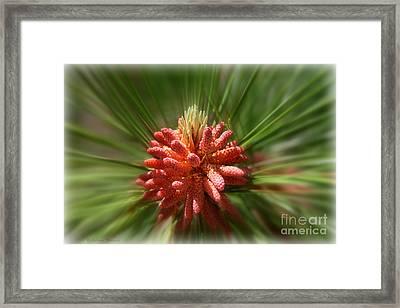Bursting Into Spring Framed Print by Debra Straub