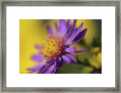 Bursting With Joy Framed Print by Connie Handscomb