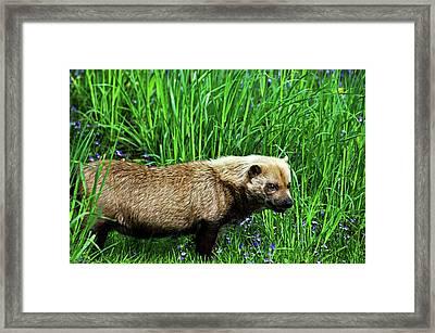 Bush Dog Framed Print