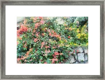 Bush Full Of Flowers. Framed Print