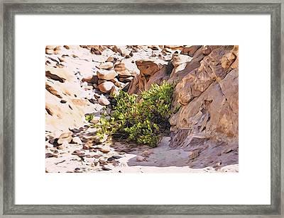 Bush In The Sinai Desert Framed Print