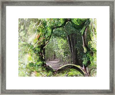 Bushwalk Framed Print