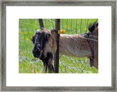 Busted Framed Print by Mike  Dawson