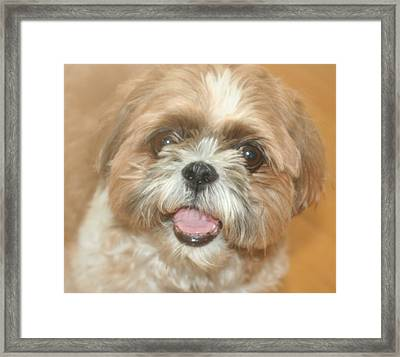 Buster Framed Print by Amy Holmes