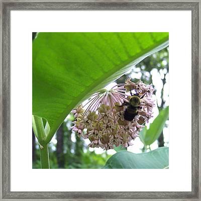 Busy As A Bee Framed Print by Anna Villarreal Garbis