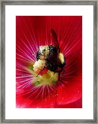 Busy As A Bee Framed Print by JoAnn SkyWatcher