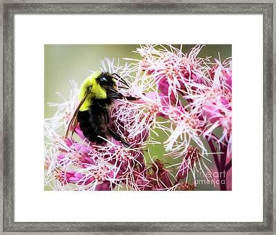 Framed Print featuring the photograph Busy As A Bumblebee by Ricky L Jones