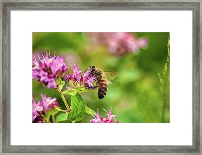 Busy At Work Framed Print by Martin Newman
