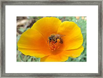 Busy Bee Framed Print by Cheryl Cutler