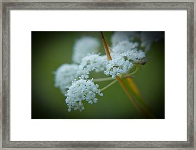Framed Print featuring the photograph Busy Bee by Daniel Hebard