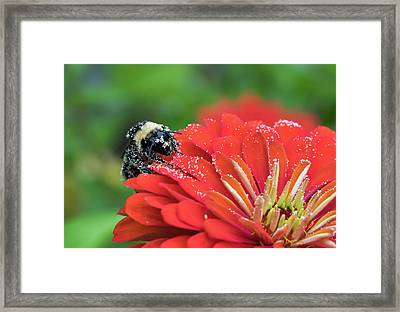 Busy Bee Framed Print by Denise McKay