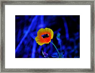 Busy Bee Framed Print by Helen Carson