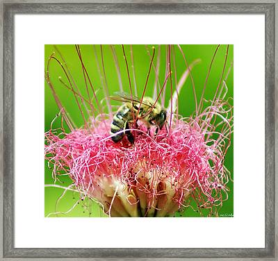 Busy Bee Framed Print by Holly Kempe