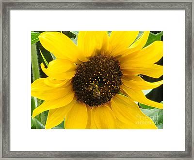 Busy Bee II Framed Print