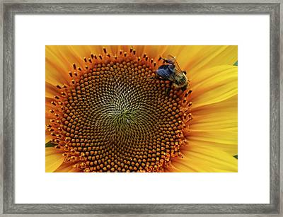 Busy Bee Framed Print by Mike Martin