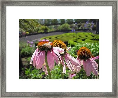 Busy Bee Framed Print by Nancy Ingersoll