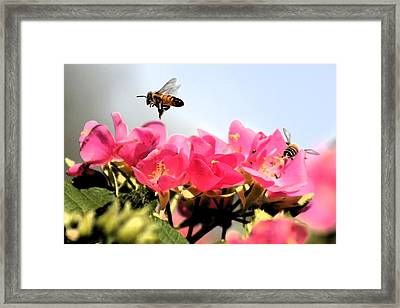 Busy Bees Framed Print by Nanette Hert